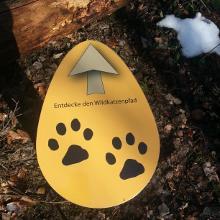 Teilweise geht es auf dem Wildkatzenlehrpfad zum Weißenfels