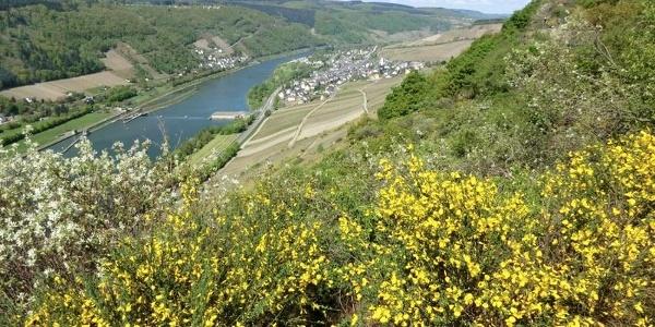 Aussicht vom Kirster Grat Richtung Enkirch
