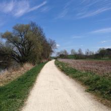 Uferweg Aare zwischen Port und Aegerten.