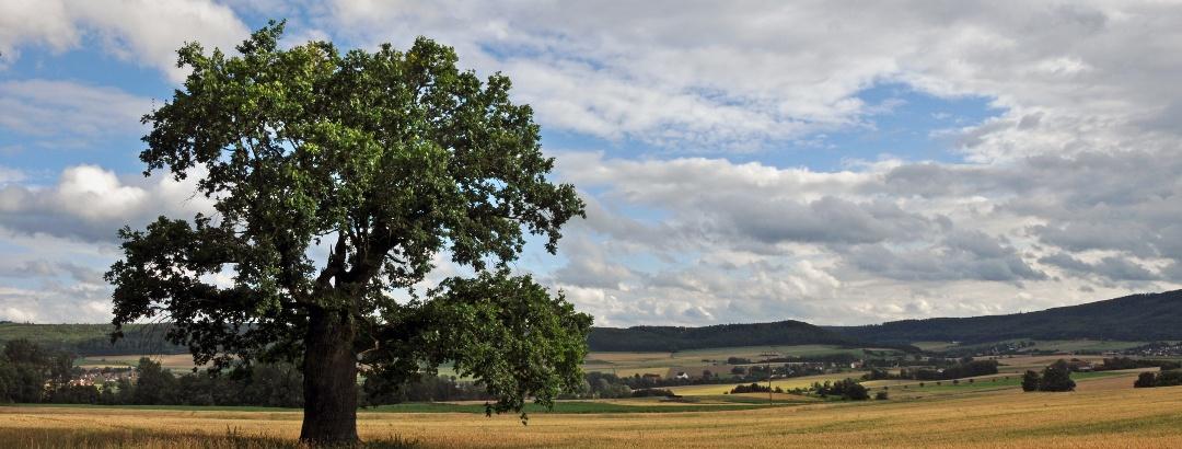 Hudeeiche bei Sabbenhausen