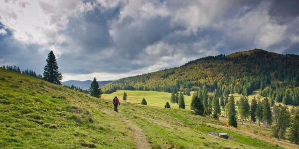 Weit sind die Weidfelder im Krunkelbachtal, rechts die Kuppe des Herzogenhorns. Foto: Birgit-Cathrin Duval