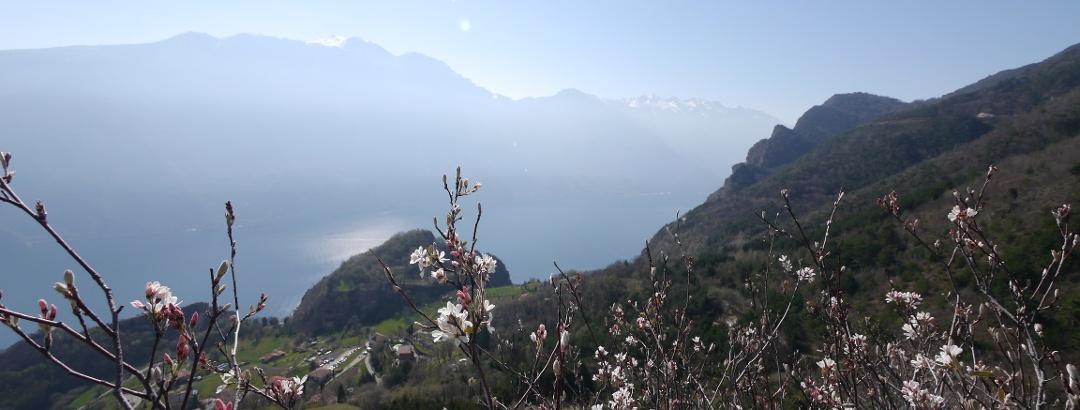Aussicht auf den Gardasee