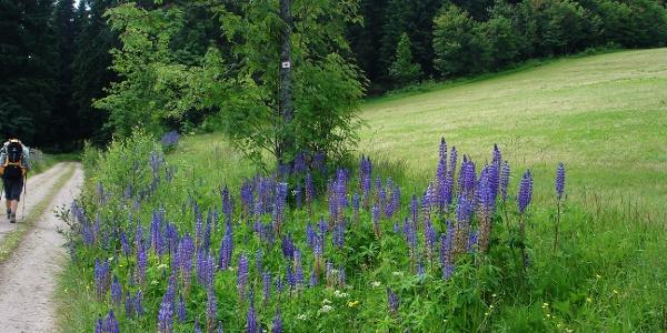 Naturschutzgebiet Briglirain