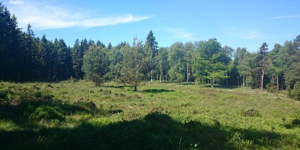 Naturschutzgebiet Krähenpfuhl