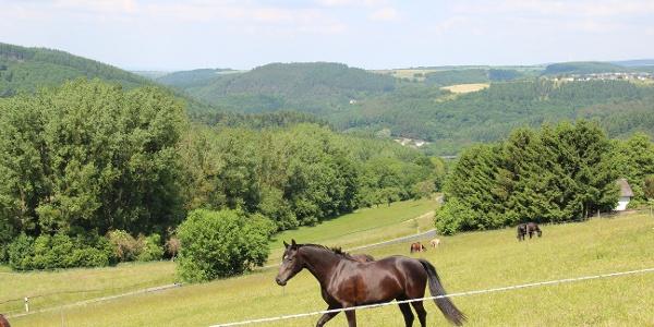Pferdekoppel bei Naurath