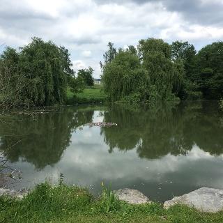 Herrenberger See