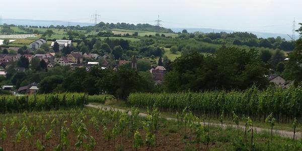 Blick auf Hertingen