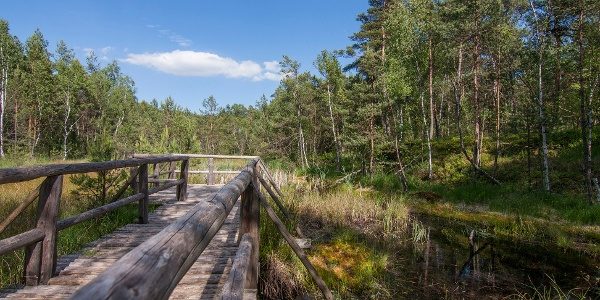 Naturpark Hochmoor Schrems