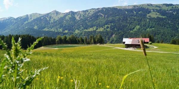 Blick auf Gleisstücken Alpe und Nagelfluhkette