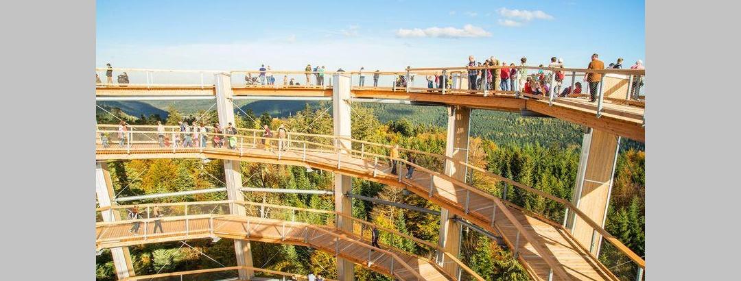 40 Meter über dem Waldboden liegt der höchste Punkt des Pfades