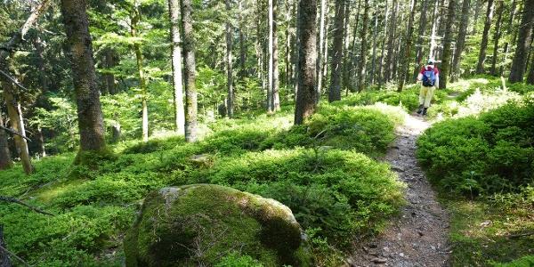 Waldpfad Rohrhardsberg