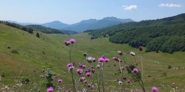 Schöne Blumenvielfalt beim Studeni Potok