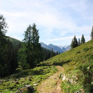Auf dem Weg zum Kahlerberg