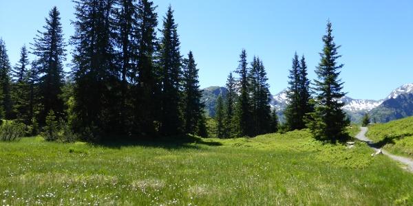 Landschaftspfad