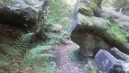 idyllischer Waldweg zum Waldbauern