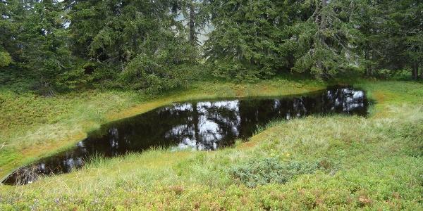 Kleine Seen am Weg