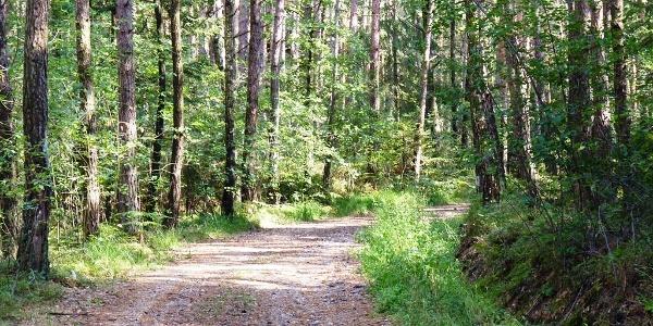 Wanderweg bei Johanniskirchen