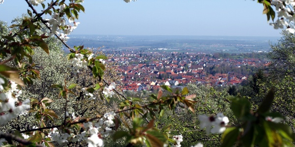 Obstblüte in Mössingen