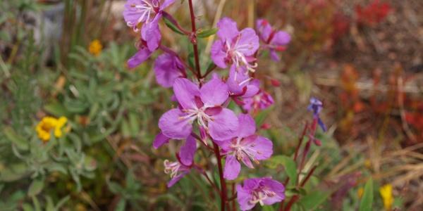 Blume im lichten Waldbereich