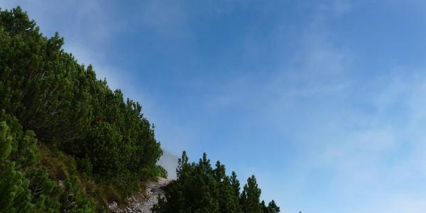 Niedrige Zirbelkiefern säumen den Weg zwischen Fürstensteig und Kuegrat