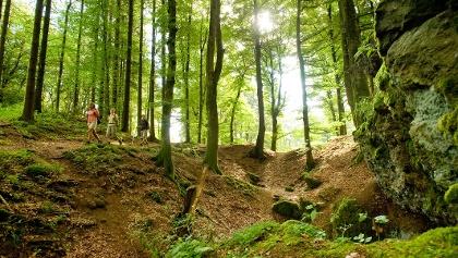 Eifel-Wälder