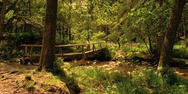 Brücke im Venn