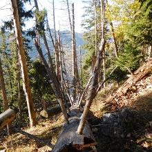 Viel Totholz ist zu beobachten