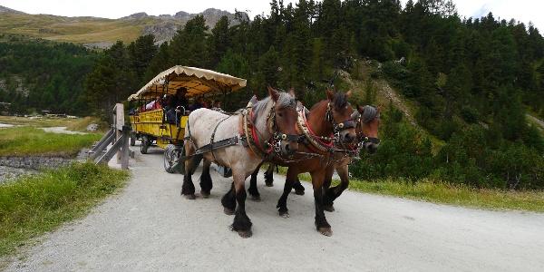 Die Pferdekutsche, die von Pontresina zum Hotel Roseg fährt