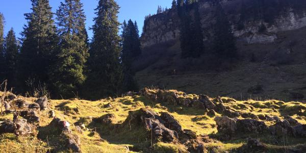 Die ersten Meter der Urwaldspur