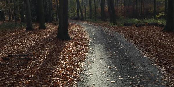 Stadtwald im Herbst