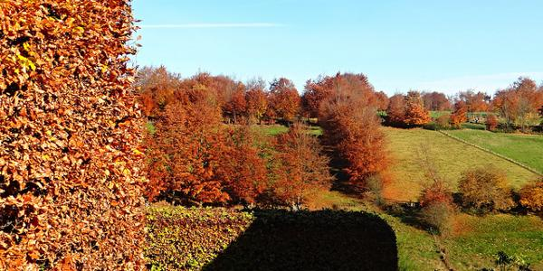 Heckenlndschaft im Herbst