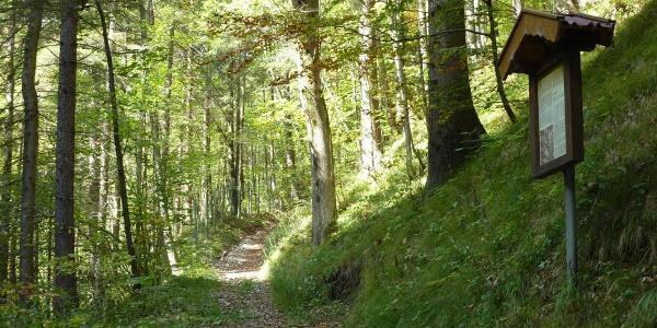 Fernwanderweg - Meditationsweg, 6. Etappe - Alte Kienbergstraße