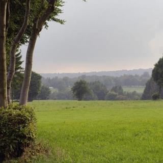 Heckenlandschaft in Ingembroich
