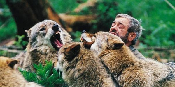 Werner Freund mit Wölfen