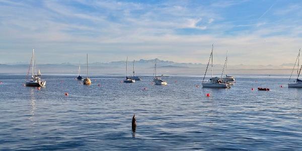 Hafen Hagnau