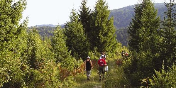 Silazak u Moravice