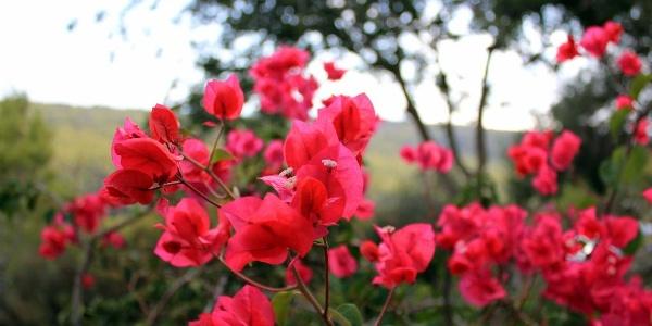 Blütenpracht im Nationalpark