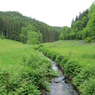 Das wildromantische Köllbachtal bei Hornberg