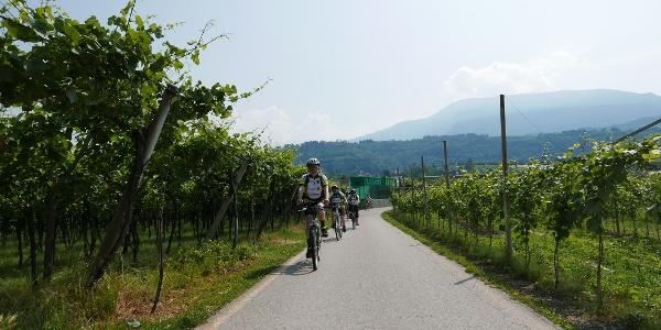 Fahrt durch die Weinfelder