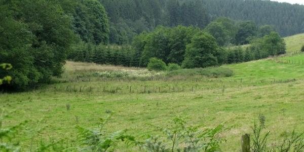 Door prachtige weilanden Heppenbach