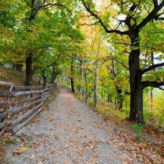 Chestnut trail