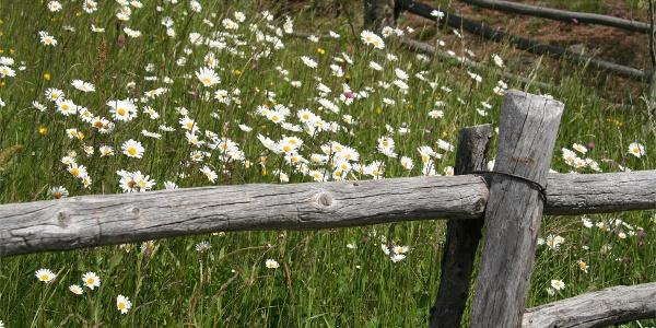 """Path """"Panorama"""" at Naturno/Naturns"""