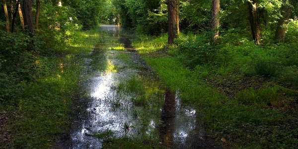 Hochwasser auf Rappenwört