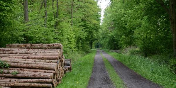 Fürstenroute Schaumburger Wald
