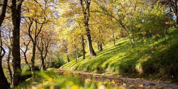 Foglie cadenti in autunno