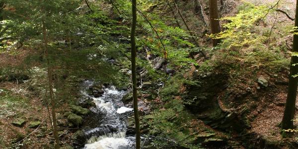 Het bos van de hertogen Ternell