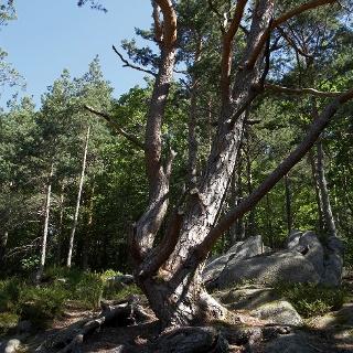 Wandern in Hornberg
