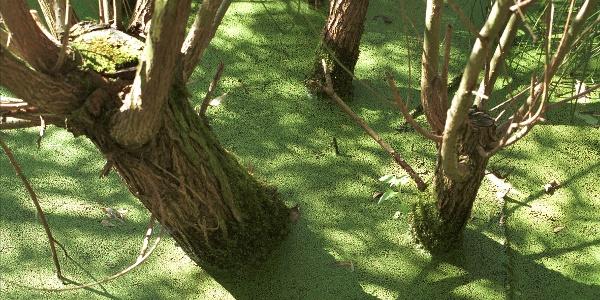 Nasse Füße: Weiden und Erlen ertragen es auch, wenn sie mal bis zum Hals im Wasser stehen