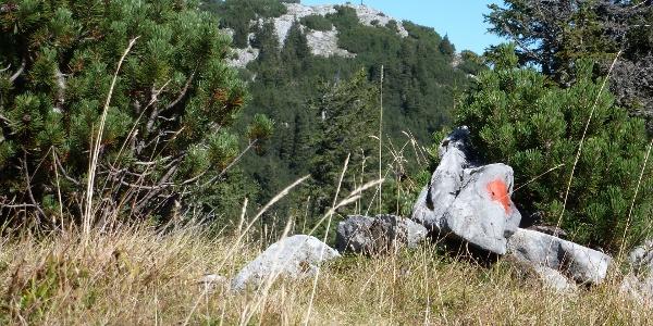 Blick zum Gipfelkreuz auf den Gr. Geiger