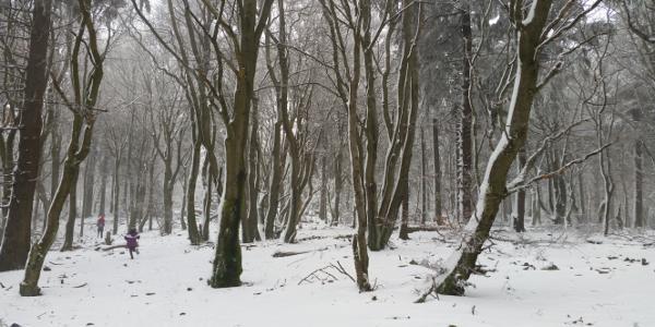 Aufstieg zum Altkönig im Winter